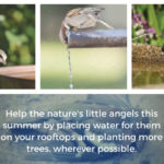 Bird Nurturing… Lets Join Hands