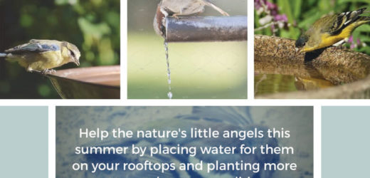 Bird Nurturing… Lets Join Hands