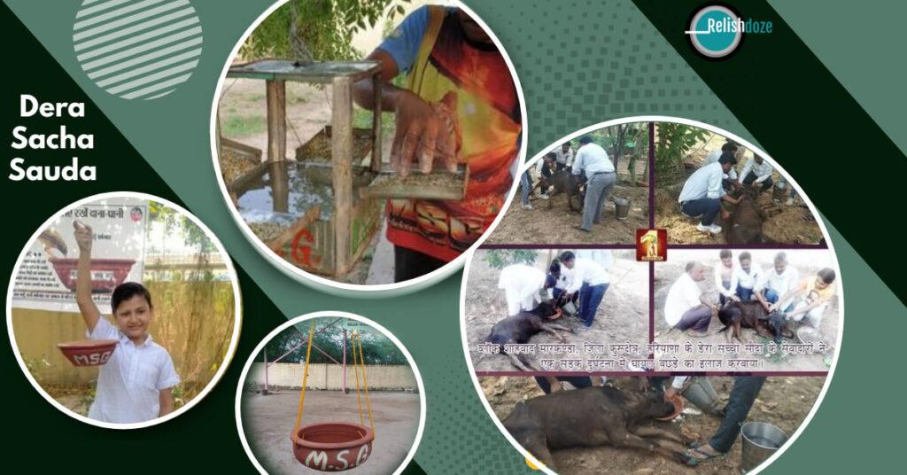 Dera Sacha Sauda for Animal Care, Protection, Non Vegetarianism - Relish Doze