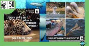 The World Wildlife fund - Relish Doze