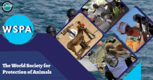 World Society for the Protection of Animals - Relish Doze