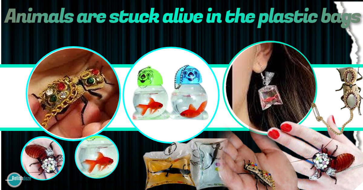 Animals are Stuck Alive in the Plastic Bags